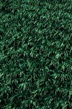 iPhone fondos de pantalla Césped, fondo de hierba verde