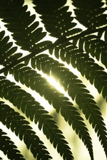 Preview iPhone wallpaper Leaves, sunlight, backlight