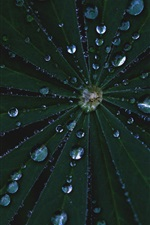Preview iPhone wallpaper Leaves, water drops, darkness