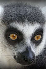Preview iPhone wallpaper Lemur look