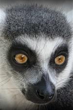 미리보기 iPhone 배경 화면 여우 원숭이 모습