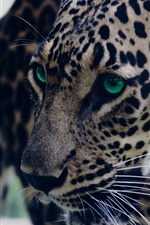 Preview iPhone wallpaper Leopard, look, green eyed