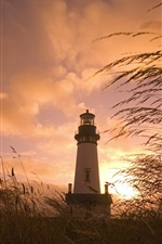Lighthouse, grass, reeds, clouds, sunset