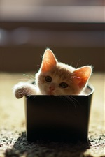 Preview iPhone wallpaper Little cat in a box, sunshine