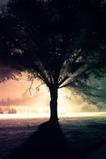 Preview iPhone wallpaper Lonely tree, silhouette, light, night