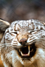 Preview iPhone wallpaper Lynx yawn, blurry background