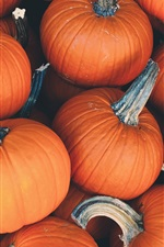 Preview iPhone wallpaper Many pumpkins, vegetables