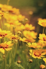 Preview iPhone wallpaper Many yellow flowers, nature