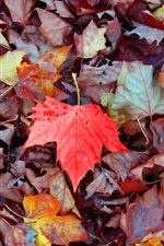 Preview iPhone wallpaper Maple leaves falling, one red leaf, autumn