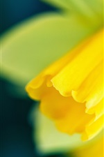 Preview iPhone wallpaper Narcissus focus, yellow flower