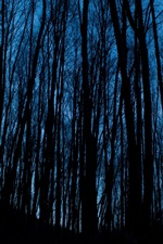 Night, forest, trees, darkness