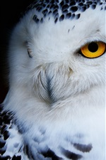 Preview iPhone wallpaper Owl front view, black background