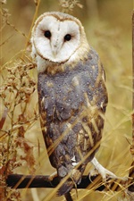 Owl standing, grass, autumn