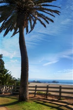 Preview iPhone wallpaper Palm tree, beach, fence, sea, sunshine