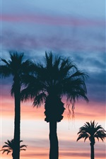 Preview iPhone wallpaper Palm trees, dusk, sunset, clouds