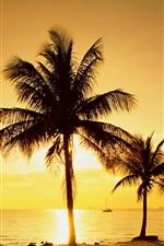 iPhone обои Пальмы, закат, пляж, море