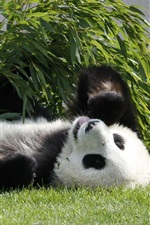 Preview iPhone wallpaper Panda lie on grass