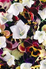 Preview iPhone wallpaper Pansies and bells flowers