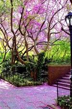 Парк, цветение деревьев, лампа, скамейка, весна