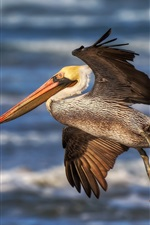 Preview iPhone wallpaper Pelican flying, wings