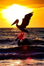Preview iPhone wallpaper Pelican, sunset, sea