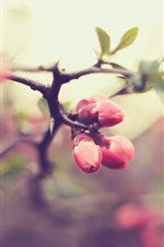 Preview iPhone wallpaper Pink flower buds, twigs, spring, bokeh
