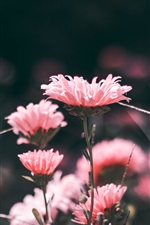 Preview iPhone wallpaper Pink flowers, blur
