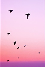 Preview iPhone wallpaper Purple sky, birds flight, silhouettes, sunset