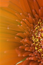 Preview iPhone wallpaper Red flower macro, petals, blurry background