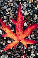 Preview iPhone wallpaper Red maple leaf, cobblestones, autumn