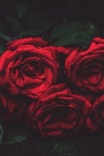 Preview iPhone wallpaper Red roses, water drops, darkness