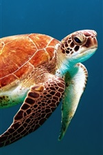 Preview iPhone wallpaper Sea turtle swim underwater