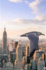 Preview iPhone wallpaper Seagull flying, New York