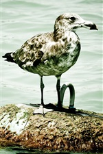Preview iPhone wallpaper Seagull, stone, sea