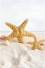 Preview iPhone wallpaper Seashells, starfish, sands