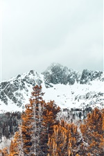 Preview iPhone wallpaper Snow covered peaks, trees, winter