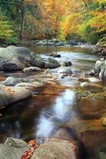 Stream, stones, trees, autumn