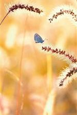 Verão, grama, borboleta