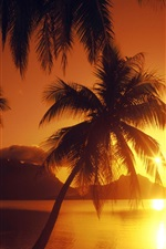 Preview iPhone wallpaper Sunset, sea, palm trees, glare, sun rays