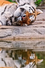 Preview iPhone wallpaper Tiger sleeping, water, stone