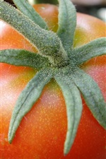 Preview iPhone wallpaper Tomato, vegetable, fresh