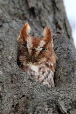 Tree hole, owl
