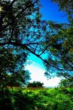 Trees, grass, green, blue sky, nature