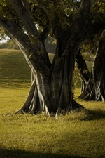 Preview iPhone wallpaper Trees, grass, shadow