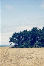 Preview iPhone wallpaper Trees, grass, sky, clouds, sea