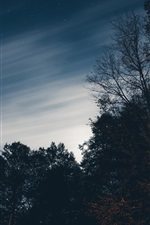 Preview iPhone wallpaper Trees, sky, dusk, night