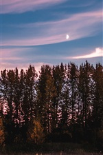Preview iPhone wallpaper Trees, sunset, sky, dusk