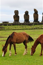 Preview iPhone wallpaper Two brown horses, grass, stones, sea