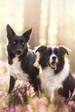 iPhone fondos de pantalla Dos perros en la naturaleza, flores silvestres