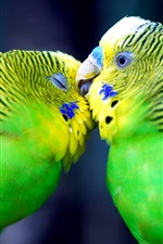 Preview iPhone wallpaper Two green parrots, couple